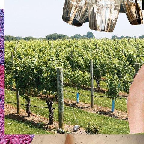 It's harvest time! 🍇🌿🍇🌿 . . . . . . . . . .  #wolffer #wolfferwine #wolfferestate #wolfferestatevineyard #wolfferstyle #wine #winemaking #winelover #winetasting #wolffercider #wolfferrose #rosecider #rosécider #familybusiness #roséallday #Rosé #roséseason #drinklocal #sustainablefarming #cherrybombe #bombesquad #hamptons #sustainability #vineyardviews #summerinabottle #montauk #smallbiz #eastend #nyc