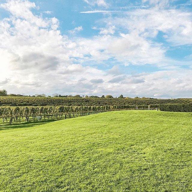 "Comment: wolfferwine said ""Happy First Day of Spring! Lush vines and blue skies will be here before we know it 🌱🌿☀️ #springhassprung . . . . .  #wolffer #wolfferwine #wolfferstate #wolfferstyle #wolffervineyard #redwine #roséwine #rosewine #wino #winot #winetime #happyhour #vineyardviews #cheers #vineyards #winepairings #winetasting #vineyard #wineries #pink #shoplocal #farmtotable #landscape #cheeseandwine #abeautifulmess #localfarms #outdoorlife #thehamptons #hamptonsstyle"""