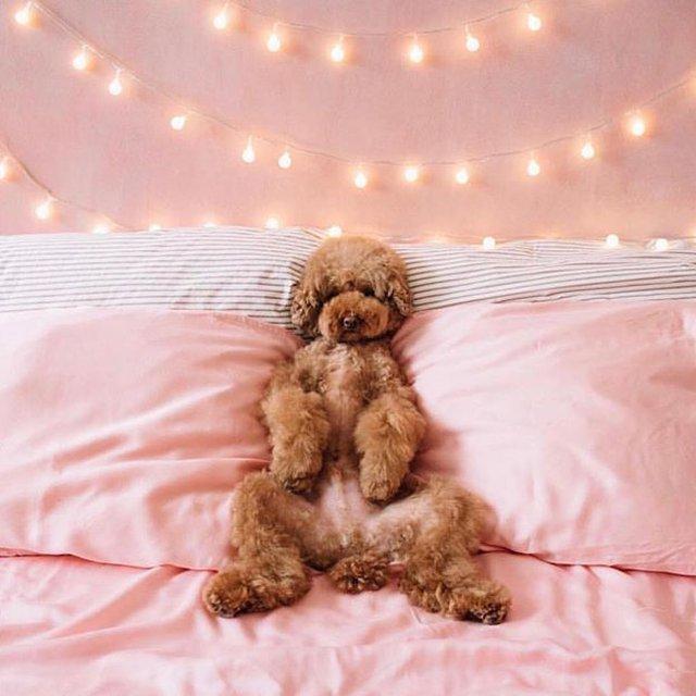 "Comment: wolfferwine said ""Sunday mood 🌛🌜 . . . . . .  #wolffer #wolfferwine #wolfferestate #wolfferestatevineyard #wolfferstyle #wine #winemaking #winelover #winetasting #vineyardviews #winetour #dogs #dogstagram #dogsofinsta #dogsofig #sundayfunday #sundaymorning #sundays #sundayvibes #decor #rosé #Pink #millennialpink #bedroomdecor #bedroomgoals #bedgoals #doggoals #fashionstyle #stringlights #mood"""